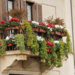 Balkon, Blumen