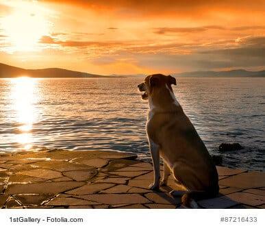 Mit Hund in den Urlaub – gute Planung ist viel wert