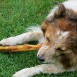 Hundesnack
