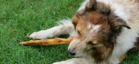 Allergien bei Hunden: Die richtigen Hunde-Kausnacks bei einer Futtermittelallergie