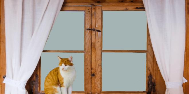 Holzfenster richtig pflegen – so geht's
