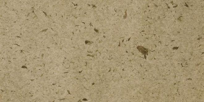 Wohngesunde Alternativen: Kork und Linoleum als Bodenbelag