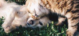 Tierkrankenversicherung: Lohnt es sich, den Vierbeiner zu versichern?