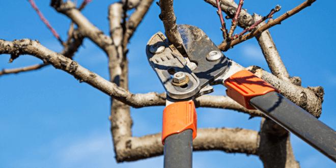 Ratgeber Garten – Bäume richtig beschneiden