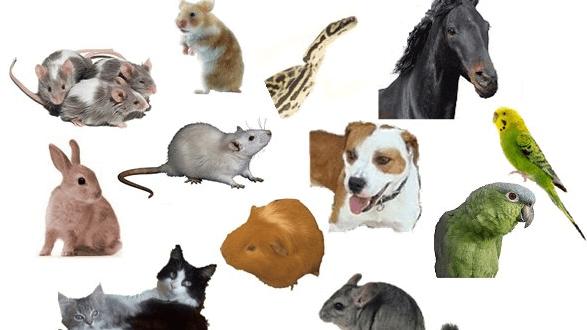 Wichtige Überlegungungen vor der Anschaffung von Haustieren
