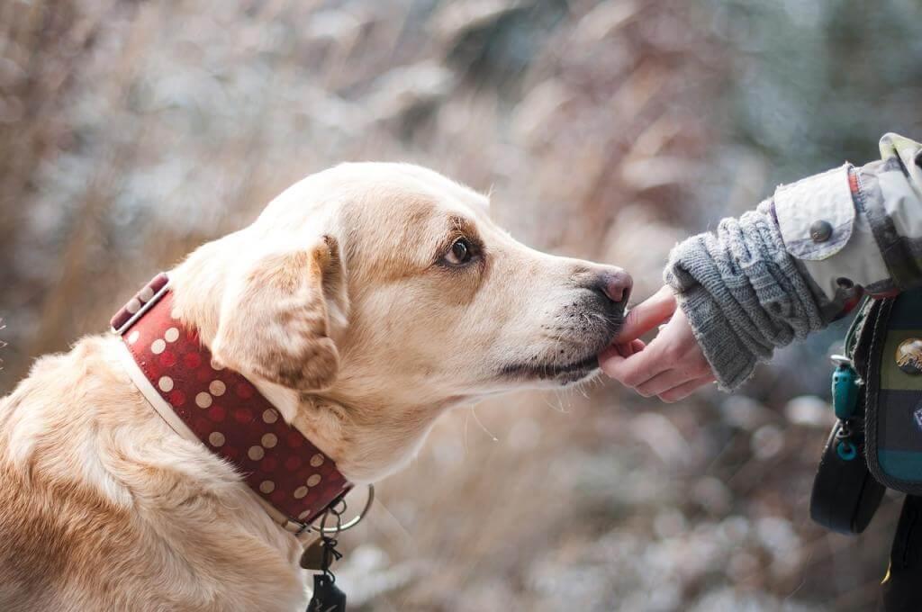 Wie sinnvoll sind Moxonleinen für die Hundeerziehung?