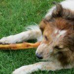 Hund, Fressen