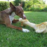 Hund, Futter