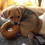Hund, Spielzeug