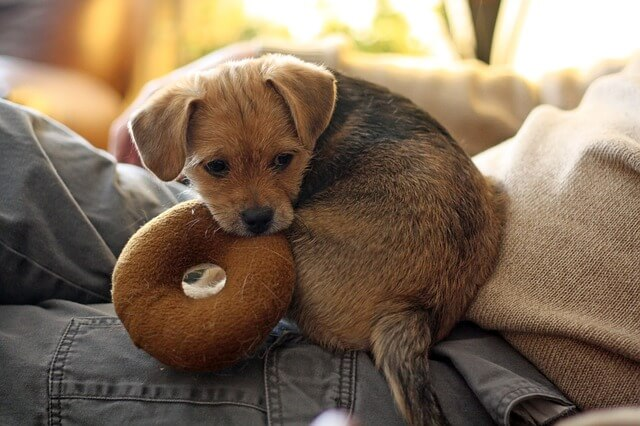 Keine Lust auf schlechtes Wetter: die besten Indoor-Aktivitäten für Hunde!
