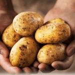 kartoffeln-lagern