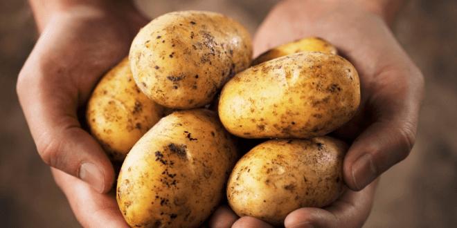So lagert man Kartoffeln am besten