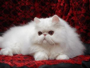 Katzenhaare entfernen leicht gemacht