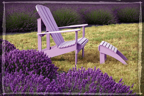 lavendel lavendelsorten f r garten und terrasse. Black Bedroom Furniture Sets. Home Design Ideas