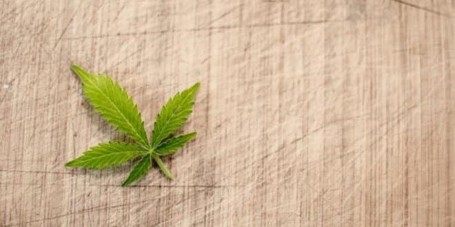 Welchen gesundheitlichen Nutzen bringt Cannabis?