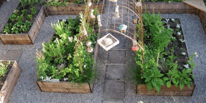 Gesund, lecker und vielseitig: Gemüse aus eigenem Anbau