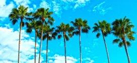 Urlaub im Sonnenstaat Florida