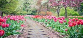 Gartengestaltung: Tipps und Ideen für die Außenanlage