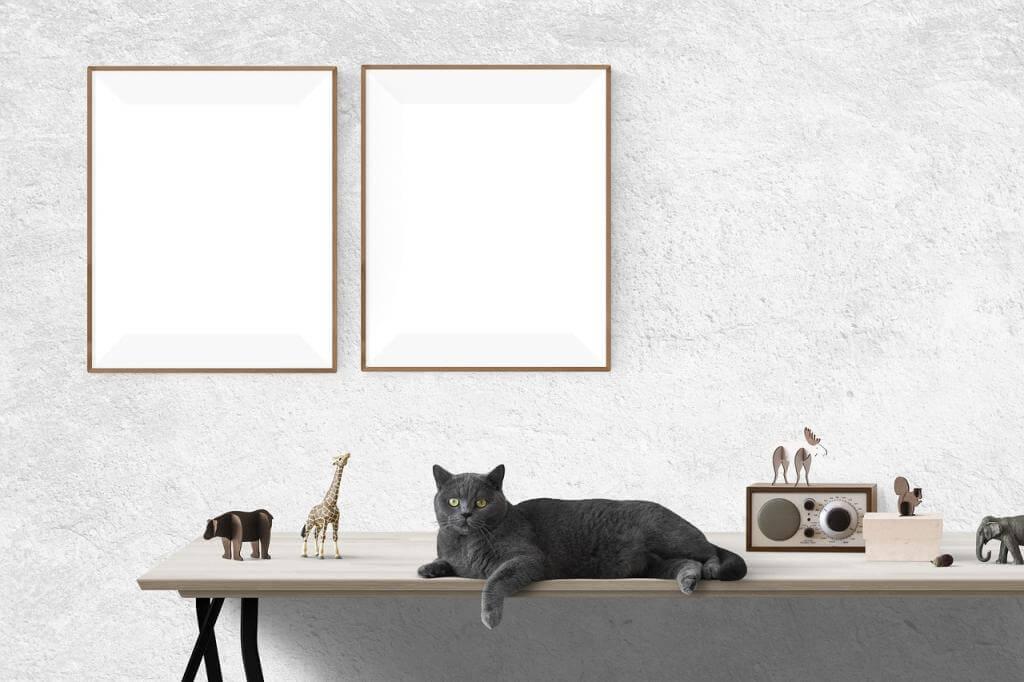 teppiche effektiv reinigen. Black Bedroom Furniture Sets. Home Design Ideas