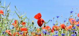 Inzwischen ein beliebter Trend: Ein eigenes Gartenhaus als Wohlfühloase