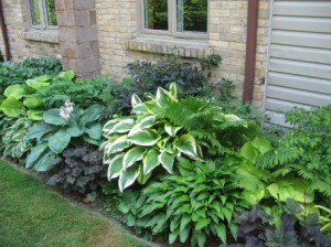 schattenpflanzen blumen f r den schattengarten. Black Bedroom Furniture Sets. Home Design Ideas